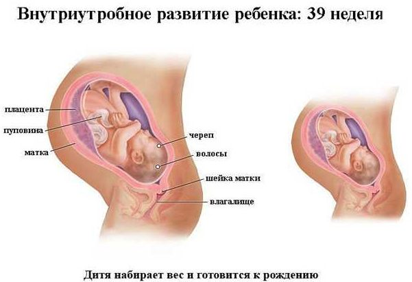 Внутриутробное развитие ребенка 39 неделя