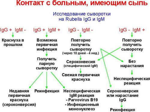 Анализ крови для выявления краснухи