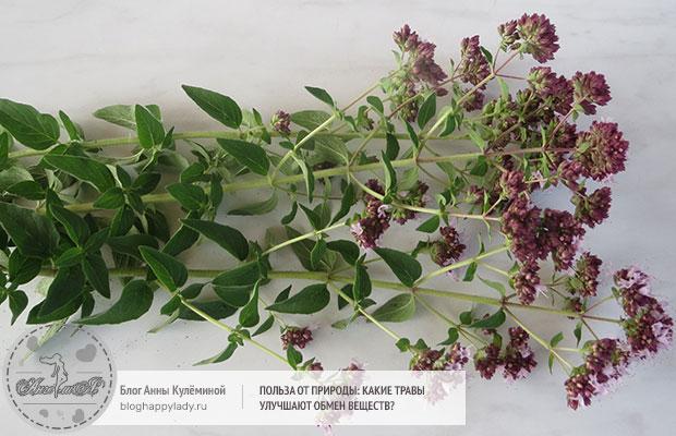 Польза от природы: какие травы улучшают обмен веществ?