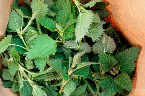лекарственные травы, полезные для волос