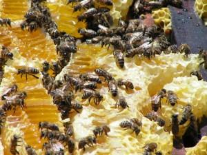 Пчелиный жир