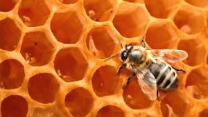 Мазь с добавлением пчелиного воска