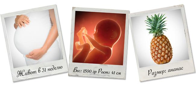31 неделя беременности развитие плода вес и рост