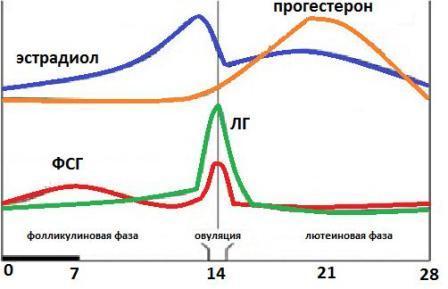 analiz-na-gormony