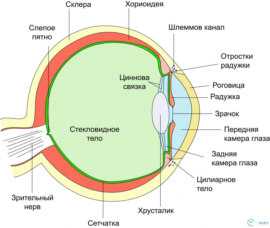 Элементы, из которых состоит глазное яблоко