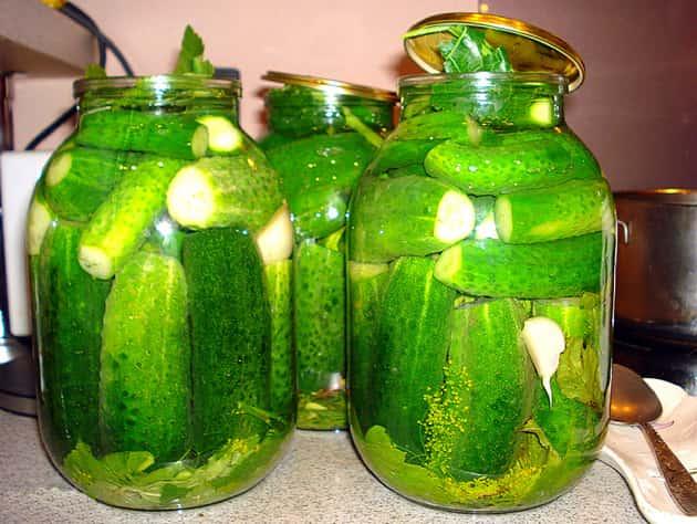 Рецепты малосольных огурцов с чесноком и зеленью быстрого приготовления
