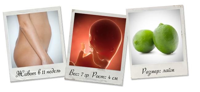 живот на 11 неделе беременности