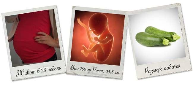 живот на 26 неделе беременности