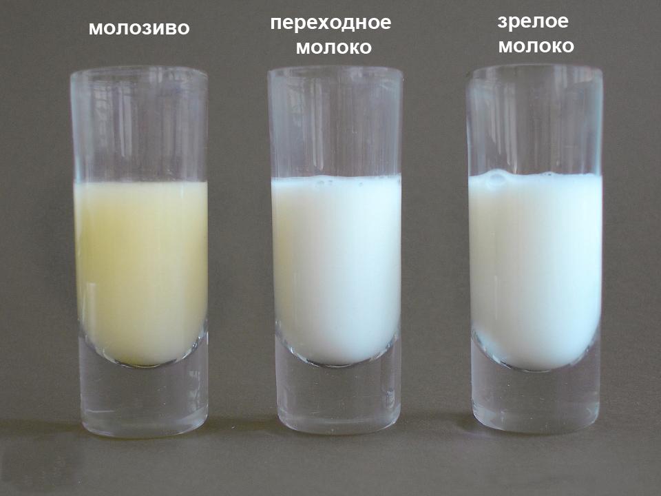 Малозиво,переходное и зрелое молоко