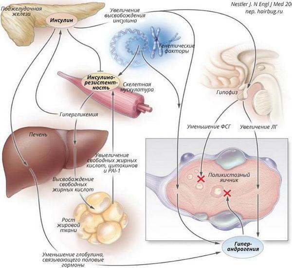 Инсулинорезистентность нарушает развитие овариального фолликула